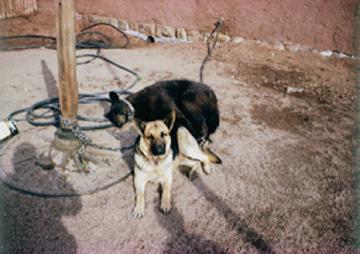 sissy-bear-and-lobo-4